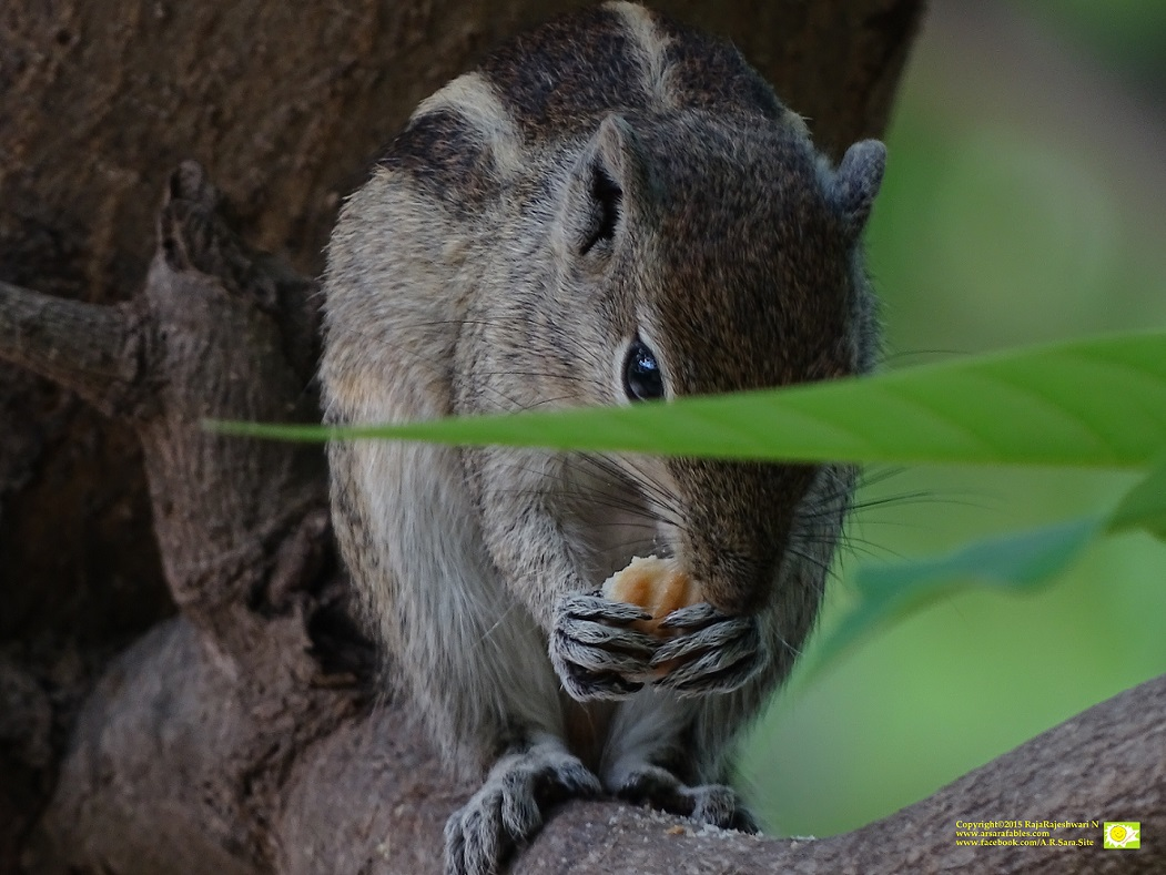 SquirrelWatch