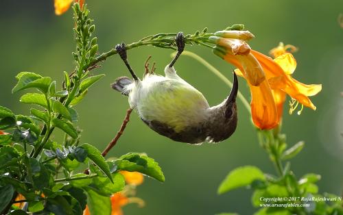 Sunbirdshare