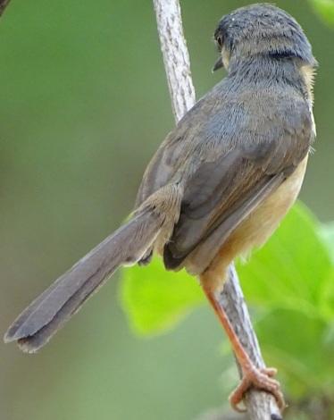 bird2020_2