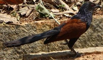Birdold1