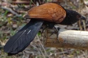 birdold2